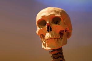 「頭蓋骨」の老化で顔が老けるらしい。骨のアンチエイジングが必要